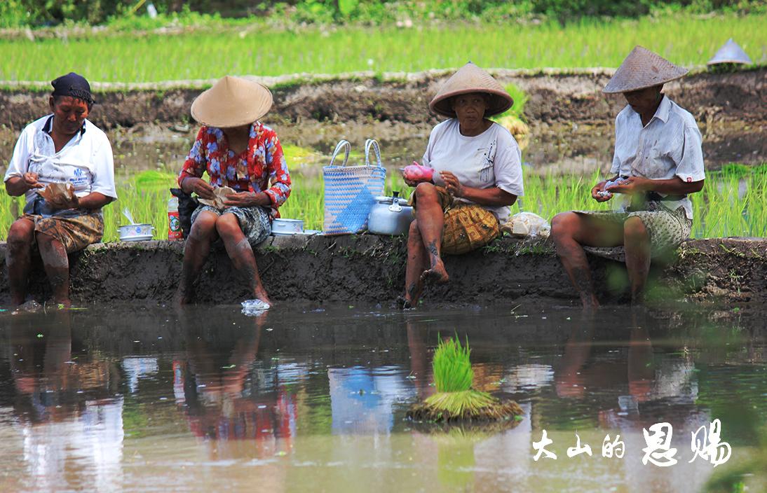 坐在稻田上的女人